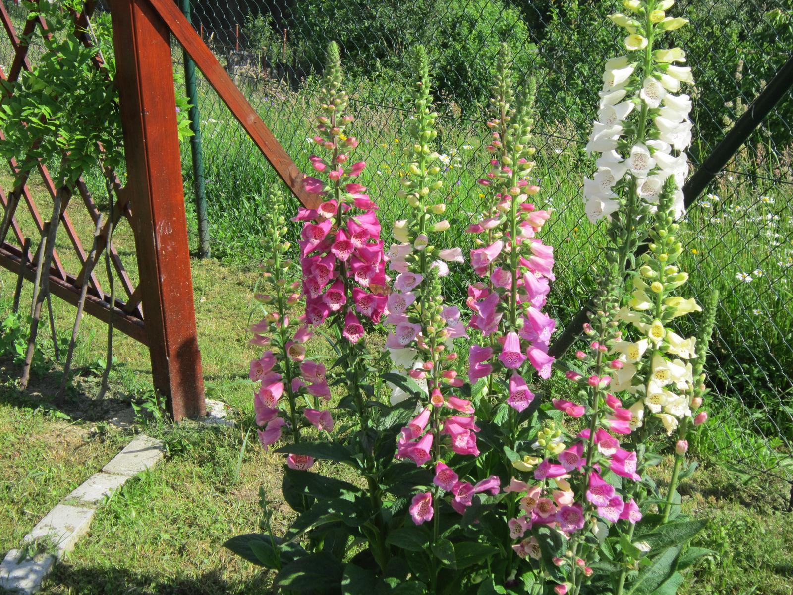 Moja záhrada...ako šiel čas - Obrázok č. 63