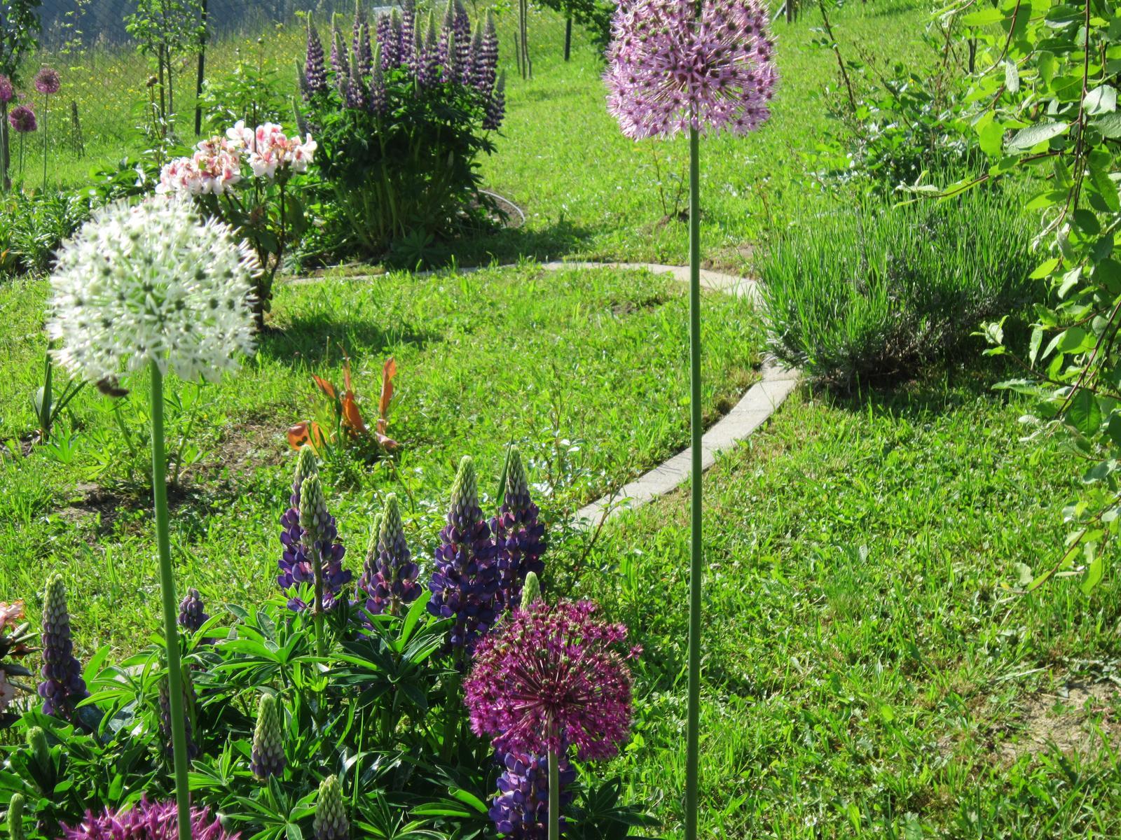 Moja záhrada...ako šiel čas - Obrázok č. 75
