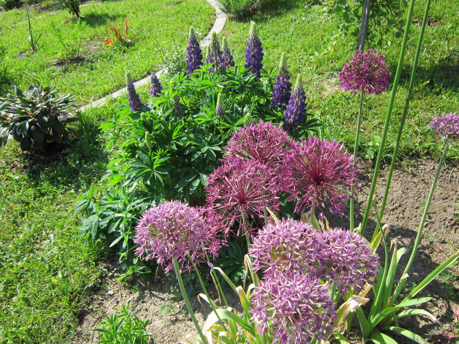 Moja záhrada...ako šiel čas - Obrázok č. 78