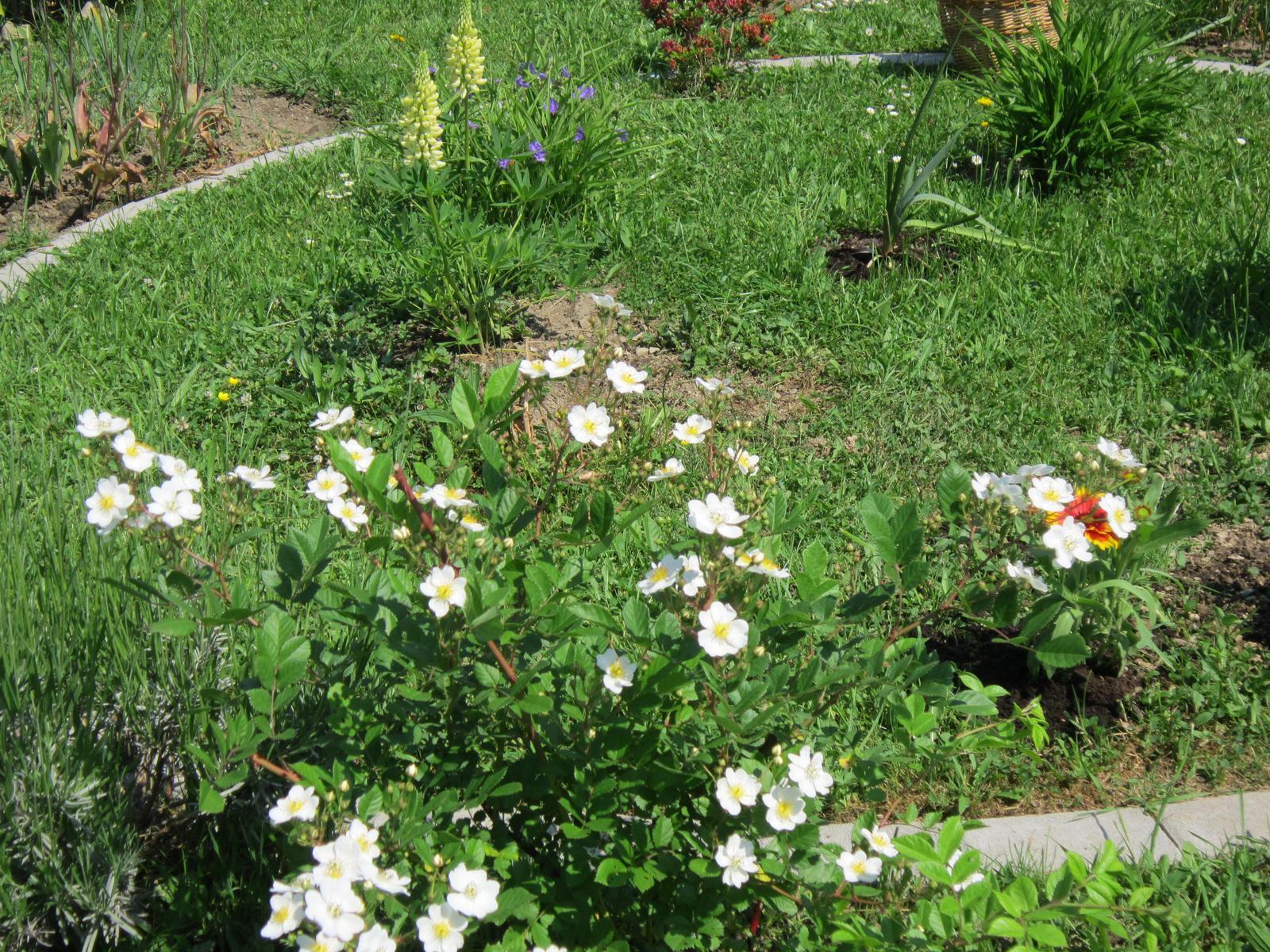 Moja záhrada...ako šiel čas - Obrázok č. 82