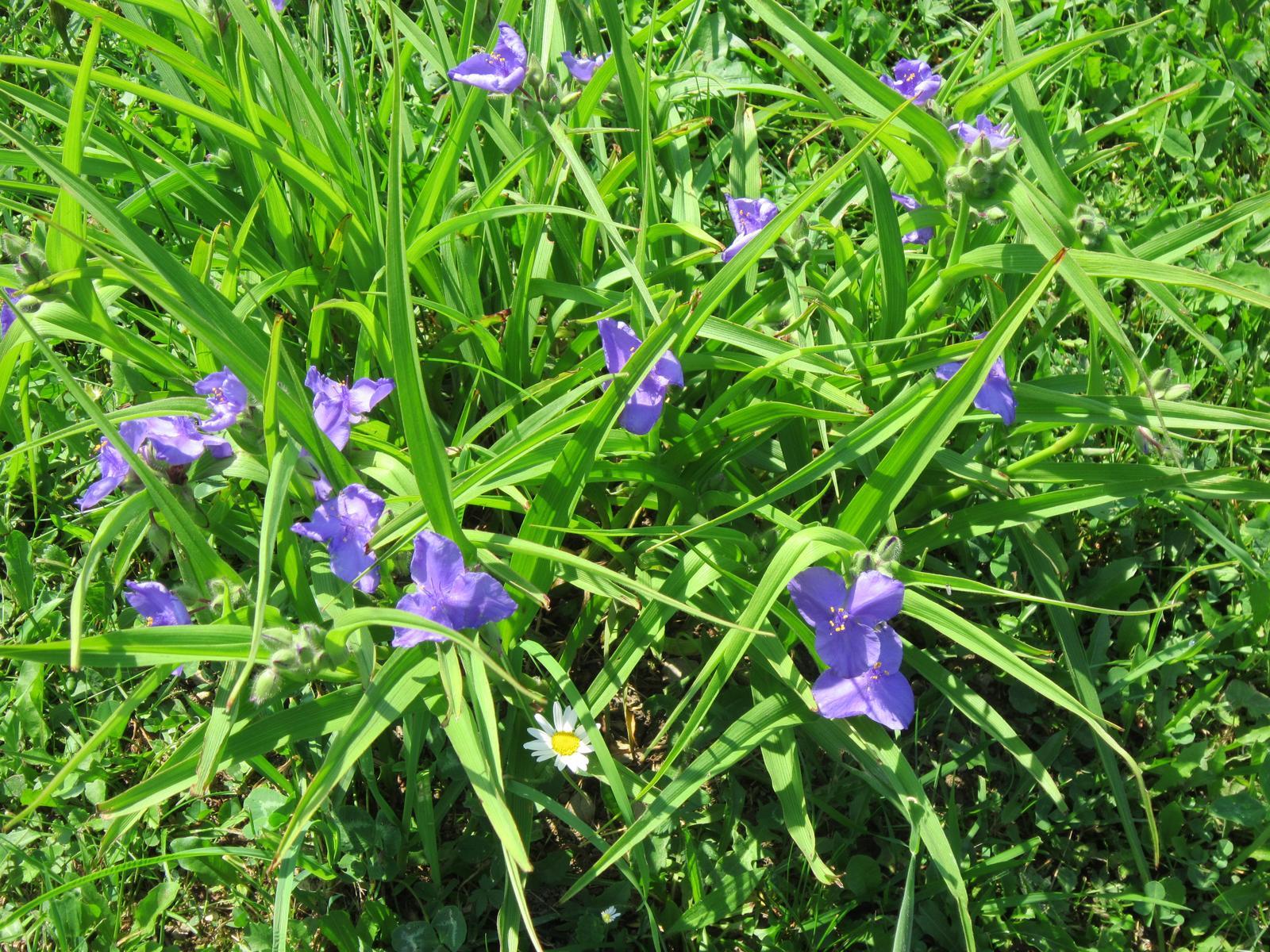 Moja záhrada...ako šiel čas - Obrázok č. 85