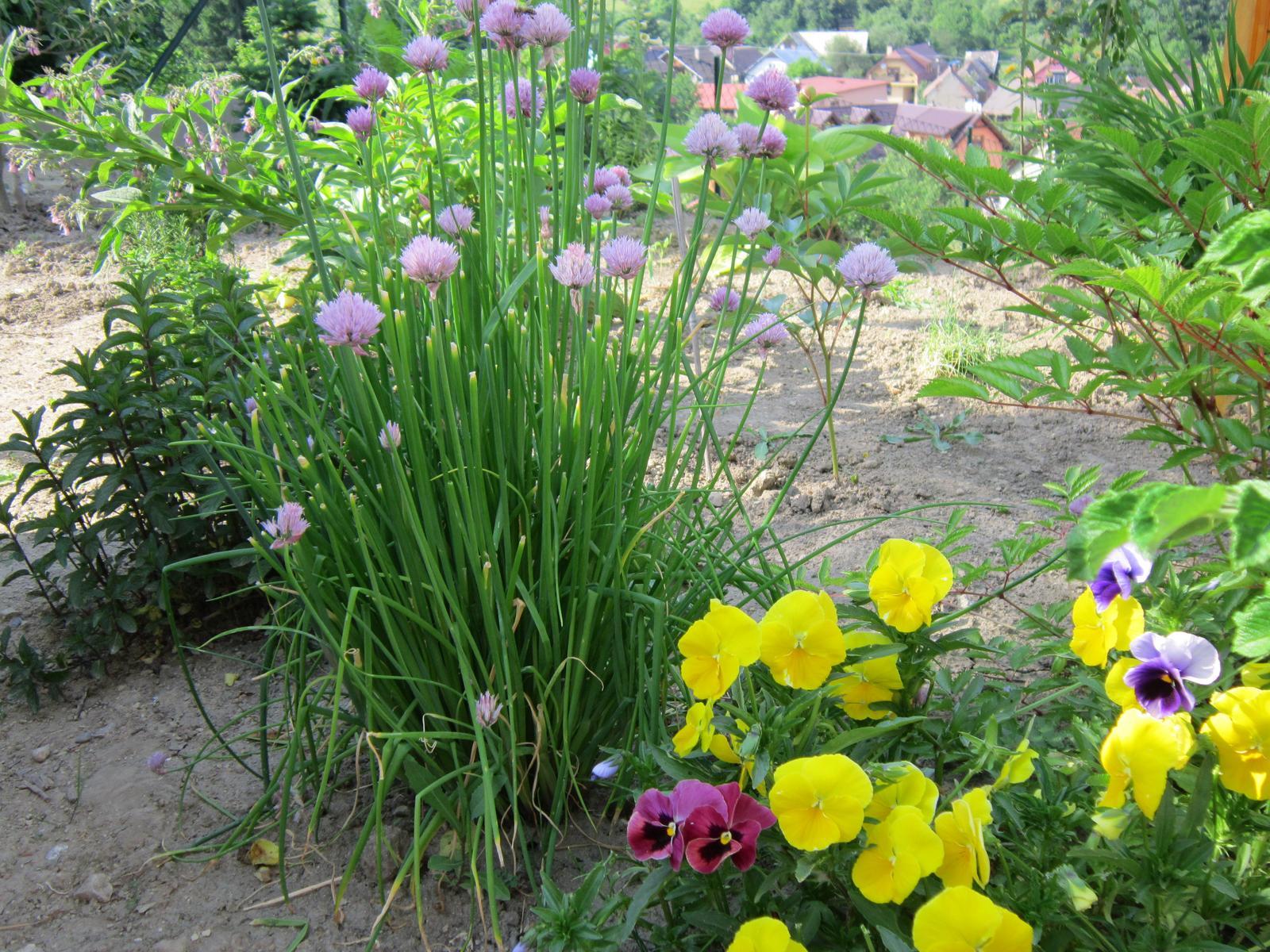 Moja záhrada...ako šiel čas - Obrázok č. 90