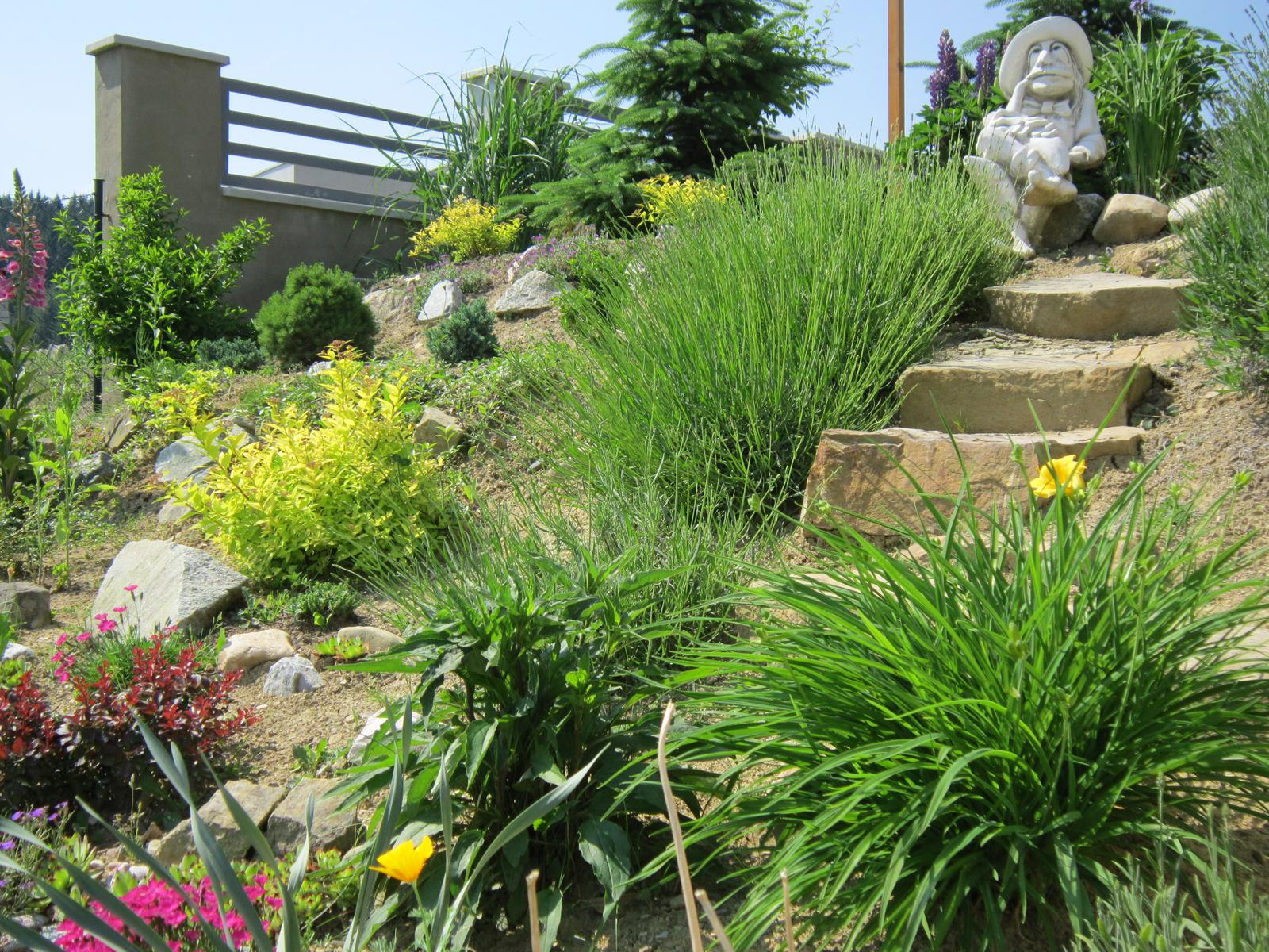 Moja záhrada...ako šiel čas - Levandule ešte nekvitnú...