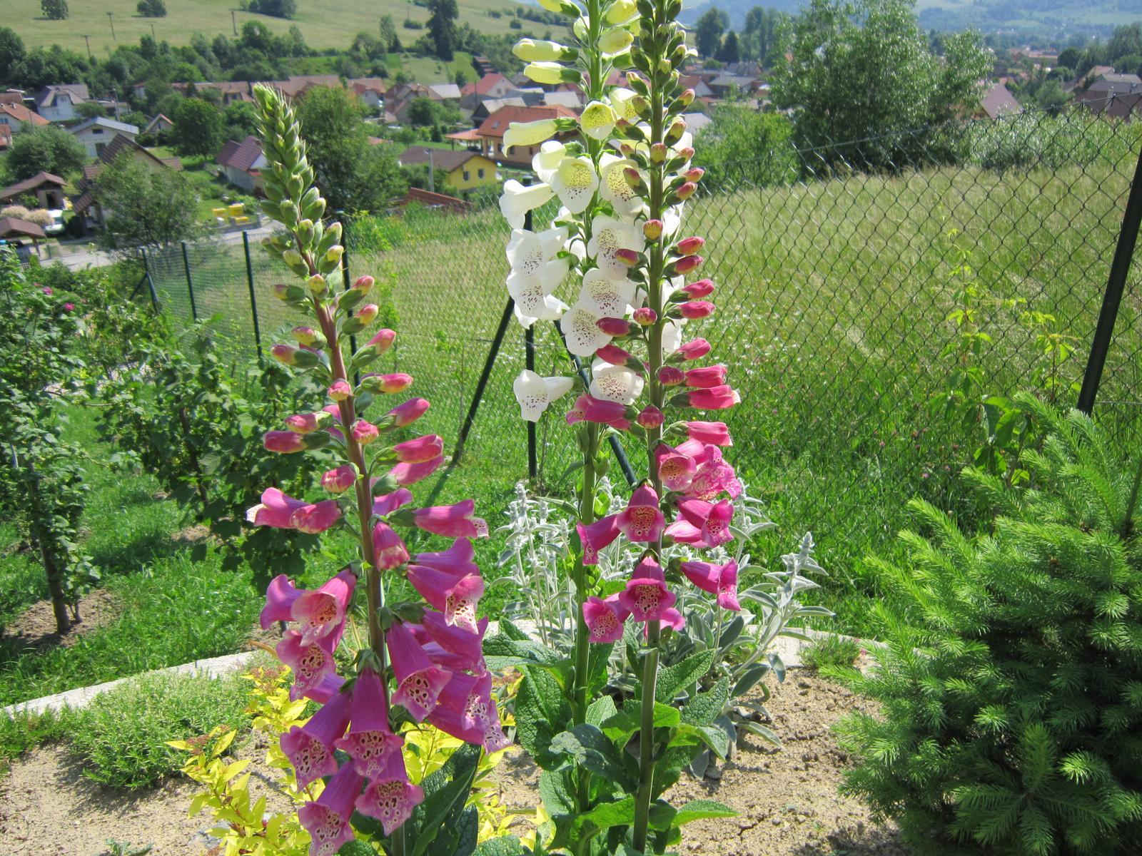 Moja záhrada...ako šiel čas - Obrázok č. 94