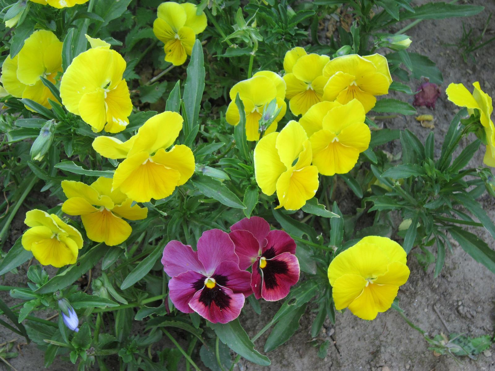 Moja záhrada...ako šiel čas - Obrázok č. 99
