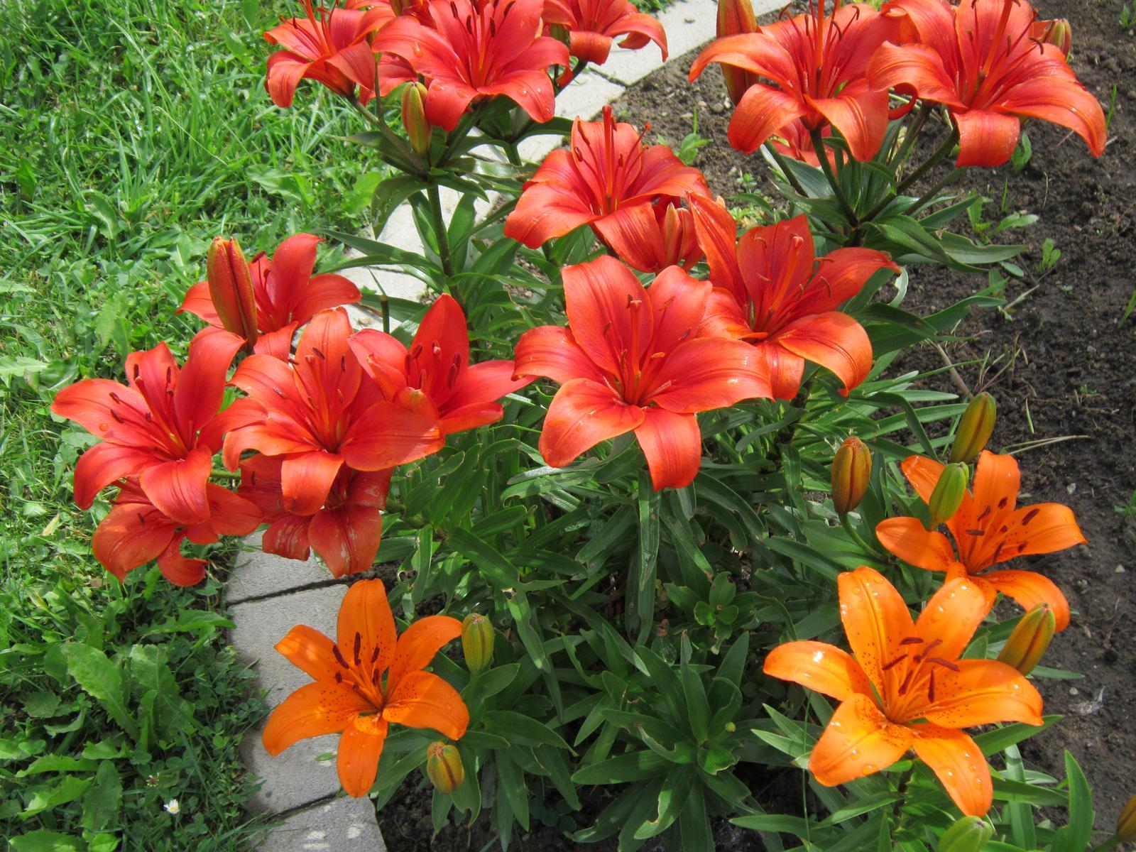 Moja záhrada...ako šiel čas - Obrázok č. 102