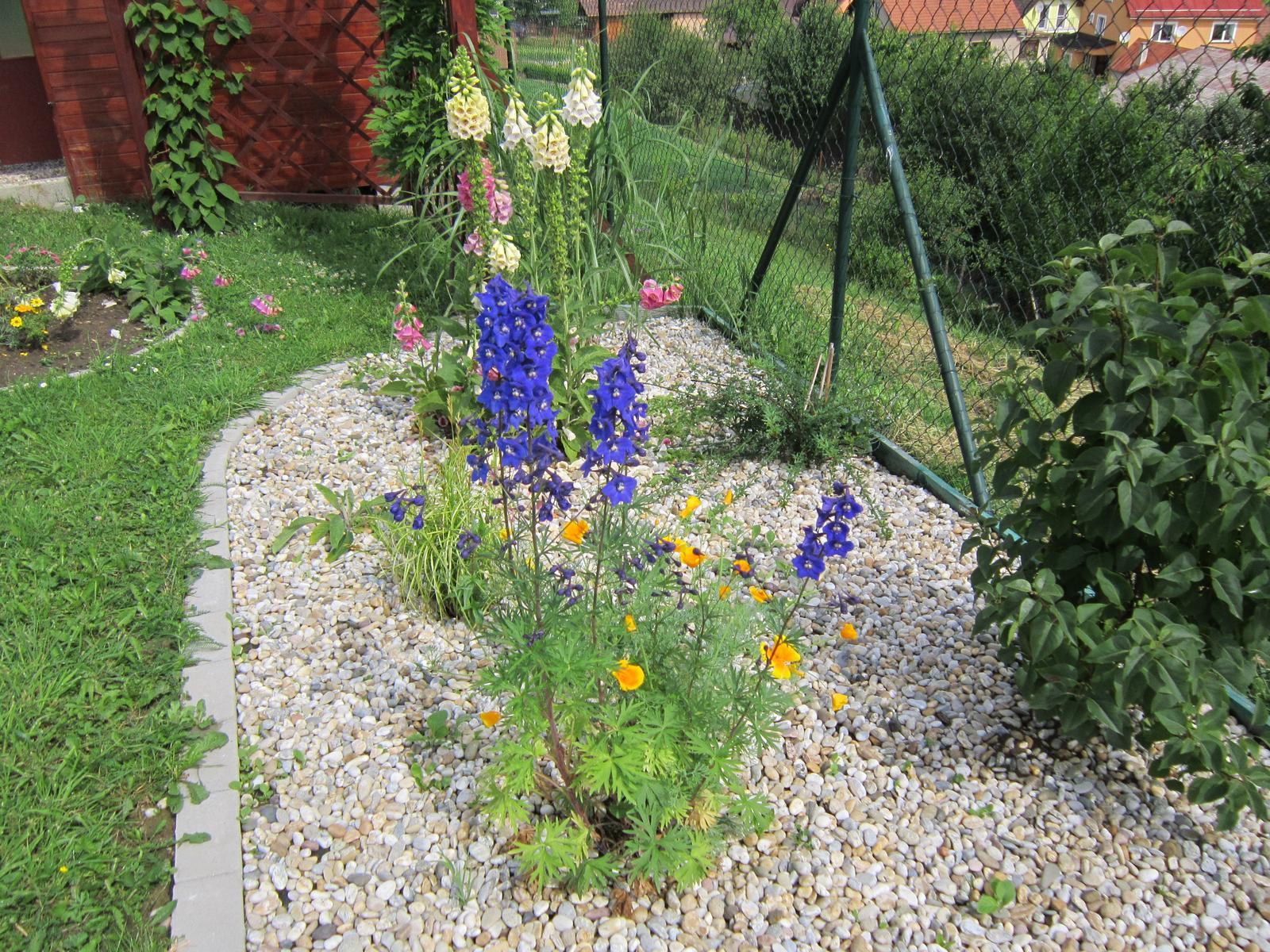 Moja záhrada...ako šiel čas - Modré stračonôžky a slncovky patria medzi moje obľúbené...