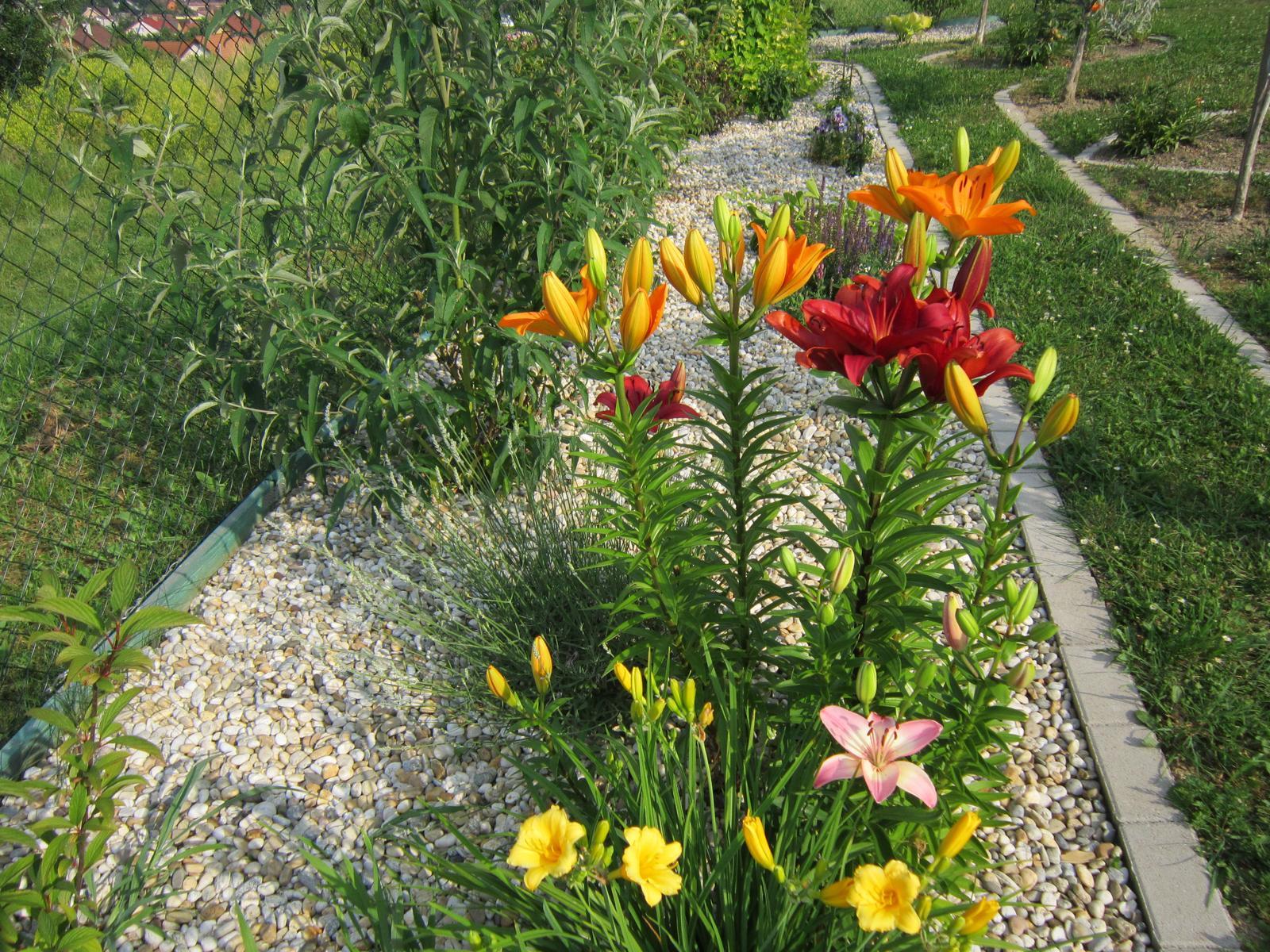 Moja záhrada...ako šiel čas - Obrázok č. 107