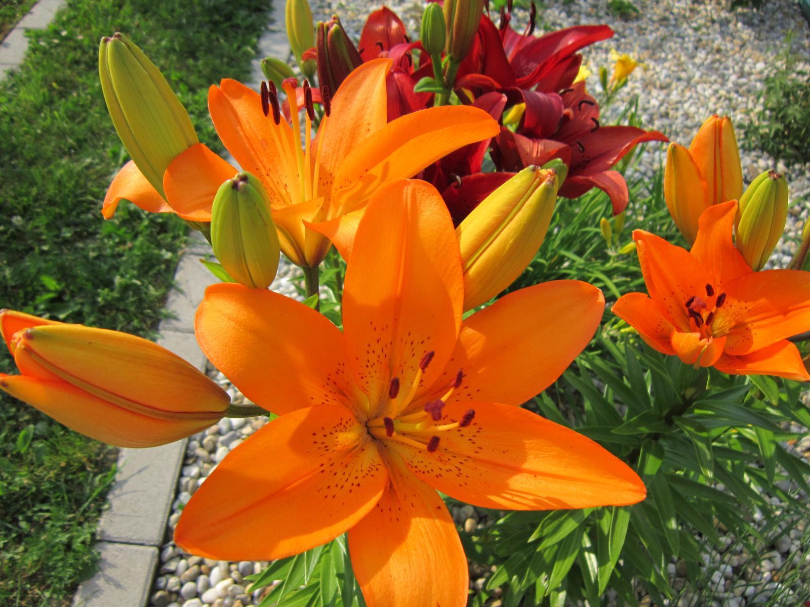 Moja záhrada...ako šiel čas - Obrázok č. 108