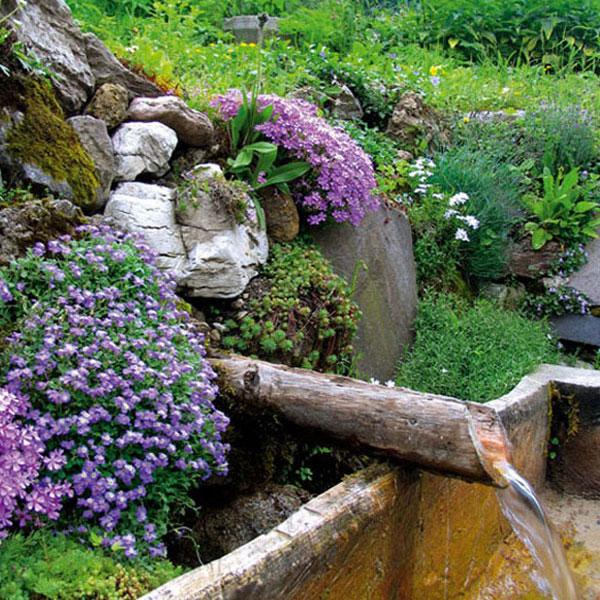 Skalky,skalničky a všeličo do záhrady - Obrázok č. 278