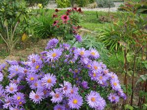 Astrovky oživia jesennú záhradu