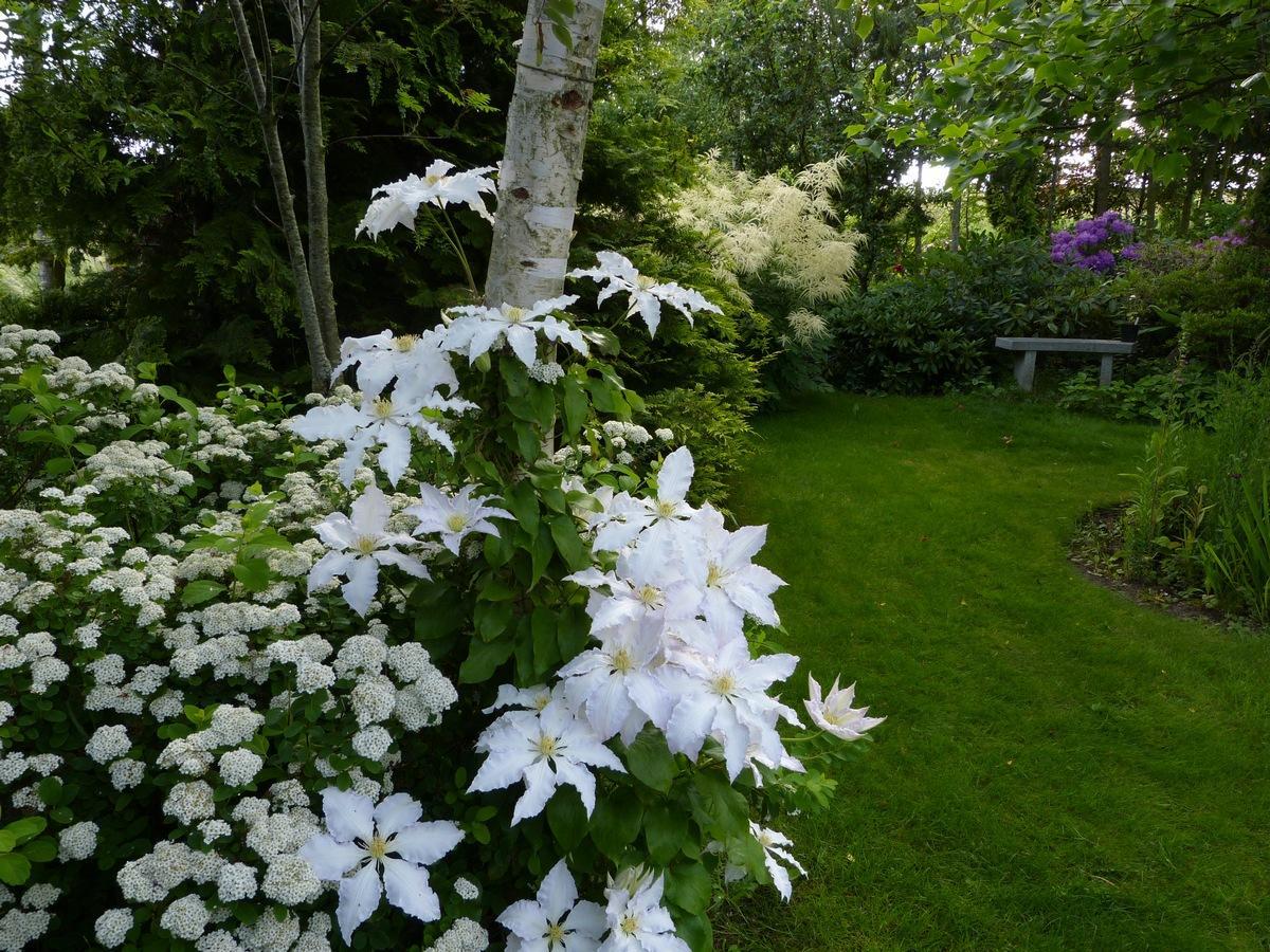 Záhrada,ktorá ťa nikdy neomrzí...divoká a krásna - Obrázok č. 3