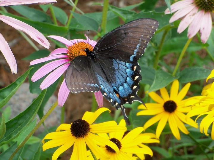 Záhrada,ktorá ťa nikdy neomrzí...divoká a krásna - Obrázok č. 9