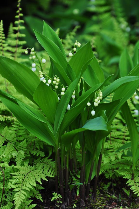 Záhrada,ktorá ťa nikdy neomrzí...divoká a krásna - Obrázok č. 10