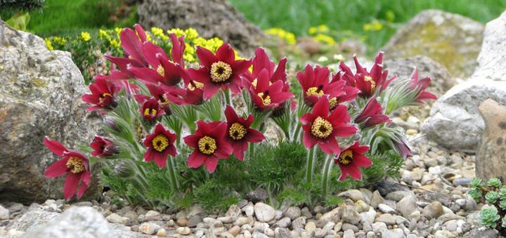 Záhrada,ktorá ťa nikdy neomrzí...divoká a krásna - Obrázok č. 11