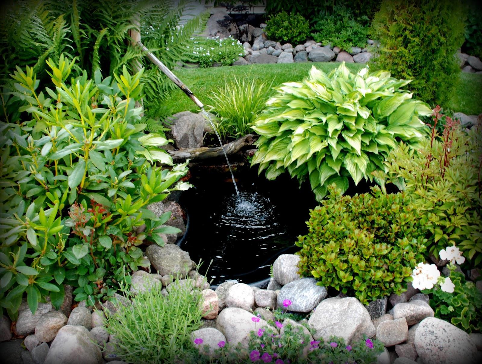 Záhrada,ktorá ťa nikdy neomrzí...divoká a krásna - Obrázok č. 14