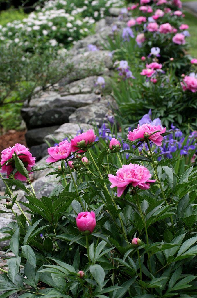 Záhrada,ktorá ťa nikdy neomrzí...divoká a krásna - Obrázok č. 19