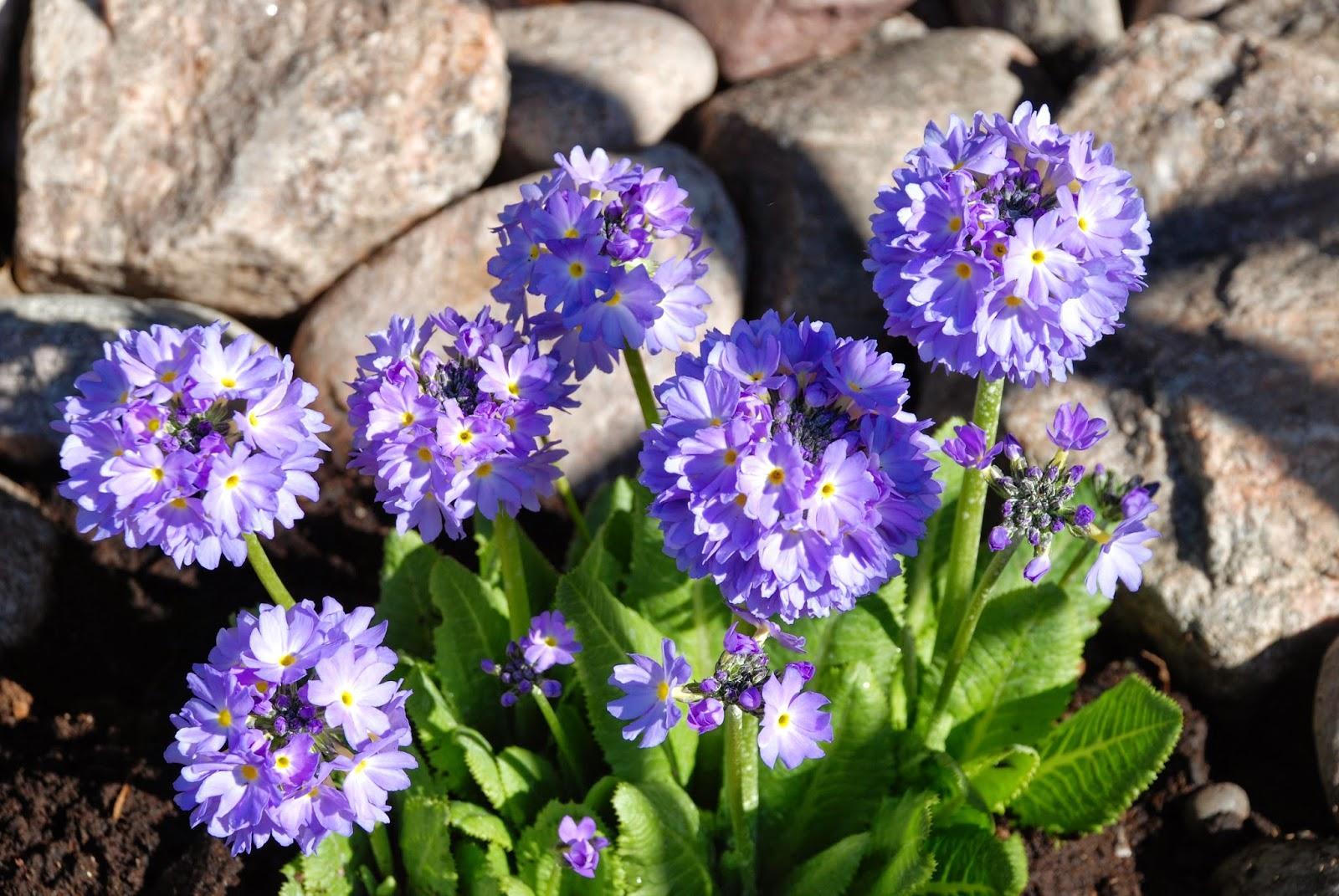 Záhrada,ktorá ťa nikdy neomrzí...divoká a krásna - Obrázok č. 20