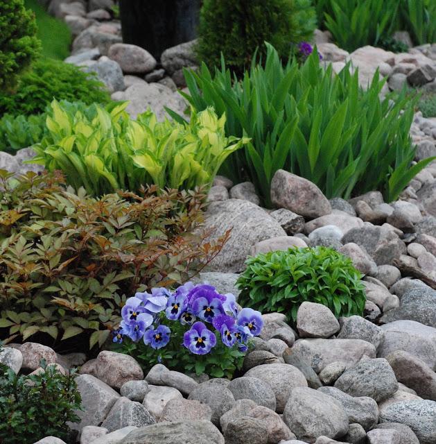 Záhrada,ktorá ťa nikdy neomrzí...divoká a krásna - Obrázok č. 21