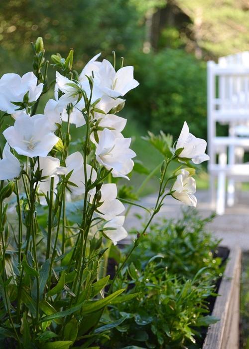 Záhrada,ktorá ťa nikdy neomrzí...divoká a krásna - Obrázok č. 23