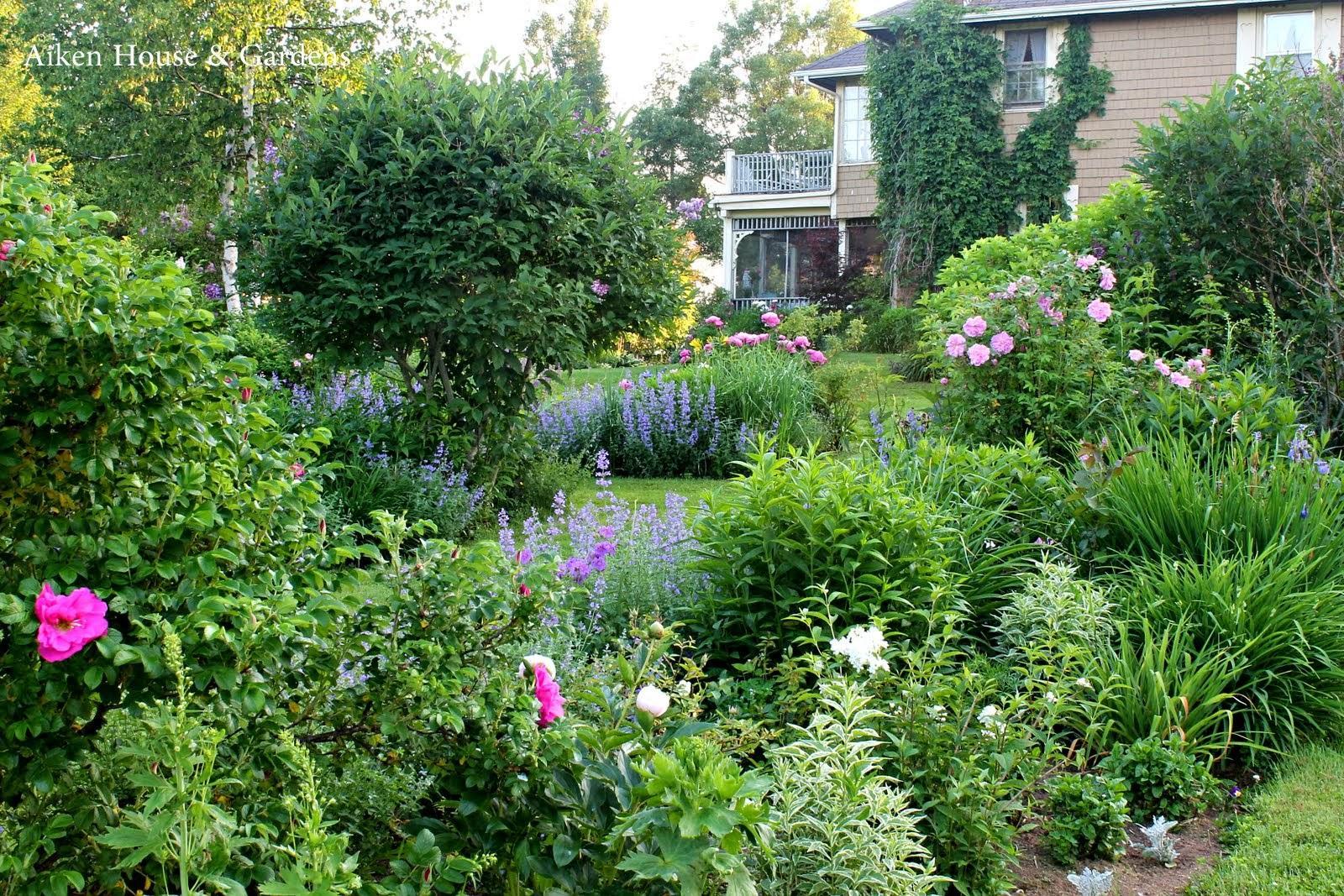 Záhrada,ktorá ťa nikdy neomrzí...divoká a krásna - Obrázok č. 30