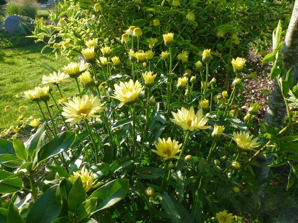 Záhrada,ktorá ťa nikdy neomrzí...divoká a krásna - Obrázok č. 34