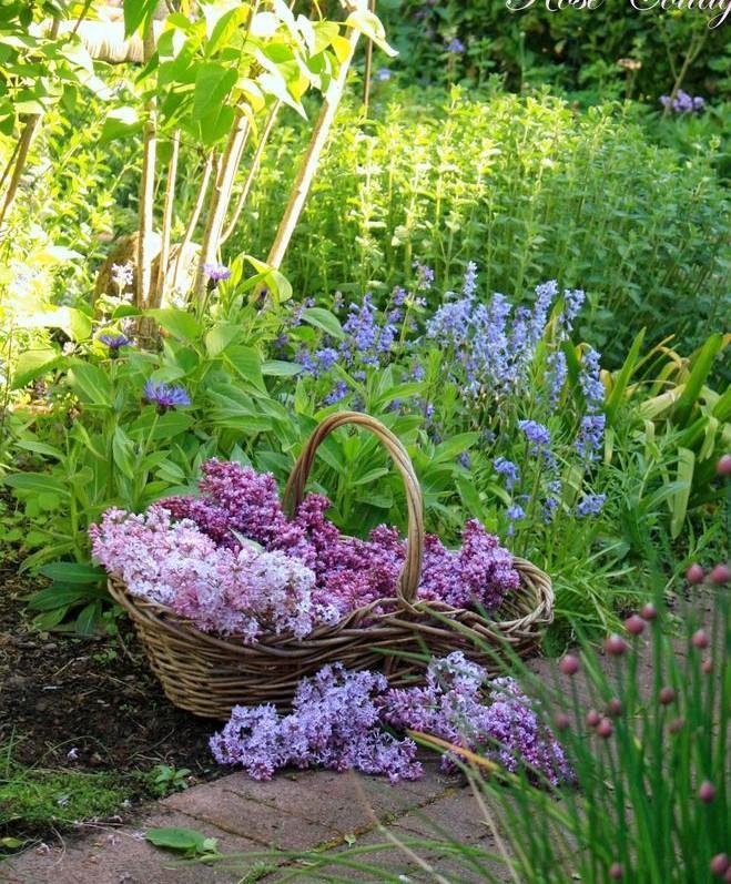 Záhrada,ktorá ťa nikdy neomrzí...divoká a krásna - Obrázok č. 37