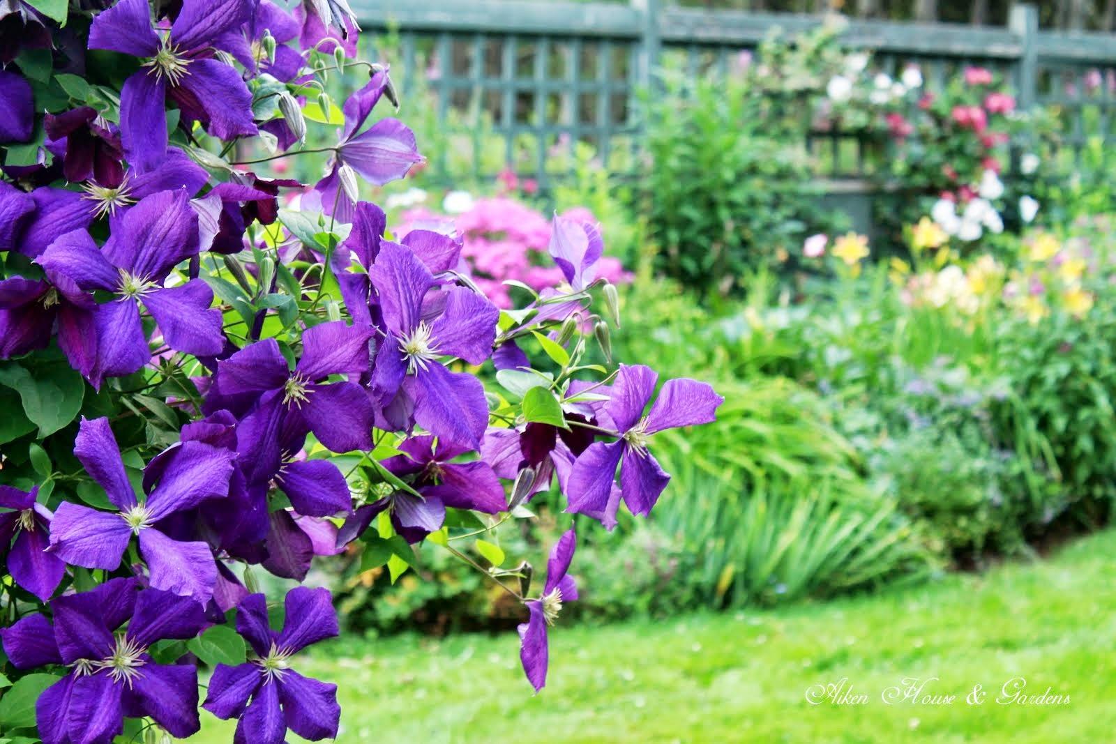 Záhrada,ktorá ťa nikdy neomrzí...divoká a krásna - Obrázok č. 38