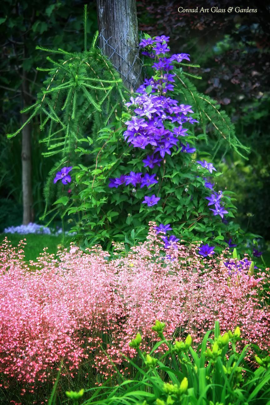 Záhrada,ktorá ťa nikdy neomrzí...divoká a krásna - Obrázok č. 39