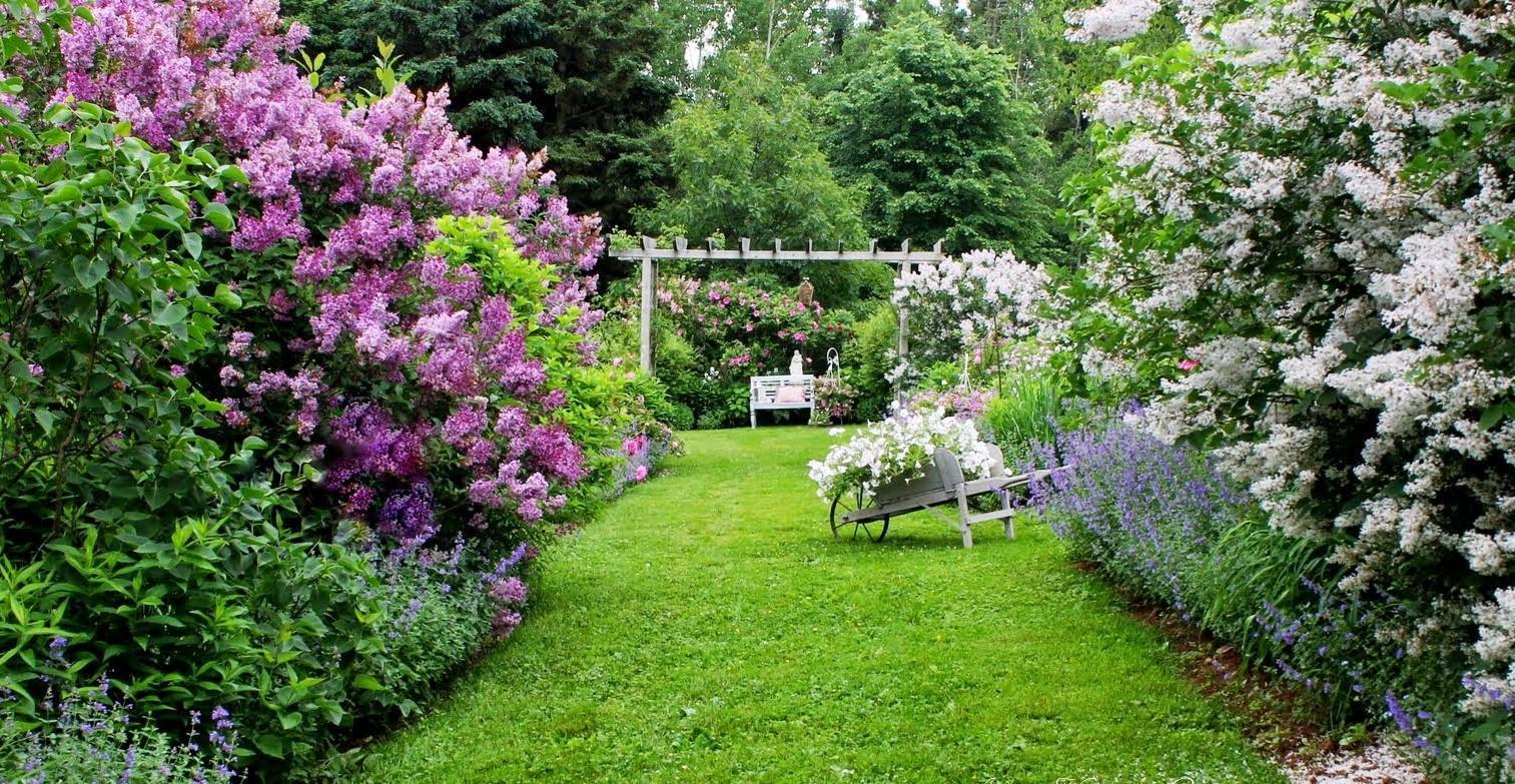 Záhrada,ktorá ťa nikdy neomrzí...divoká a krásna - Obrázok č. 40