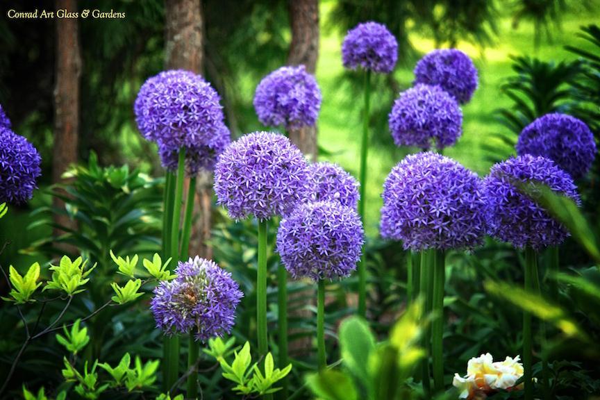 Záhrada,ktorá ťa nikdy neomrzí...divoká a krásna - Obrázok č. 47