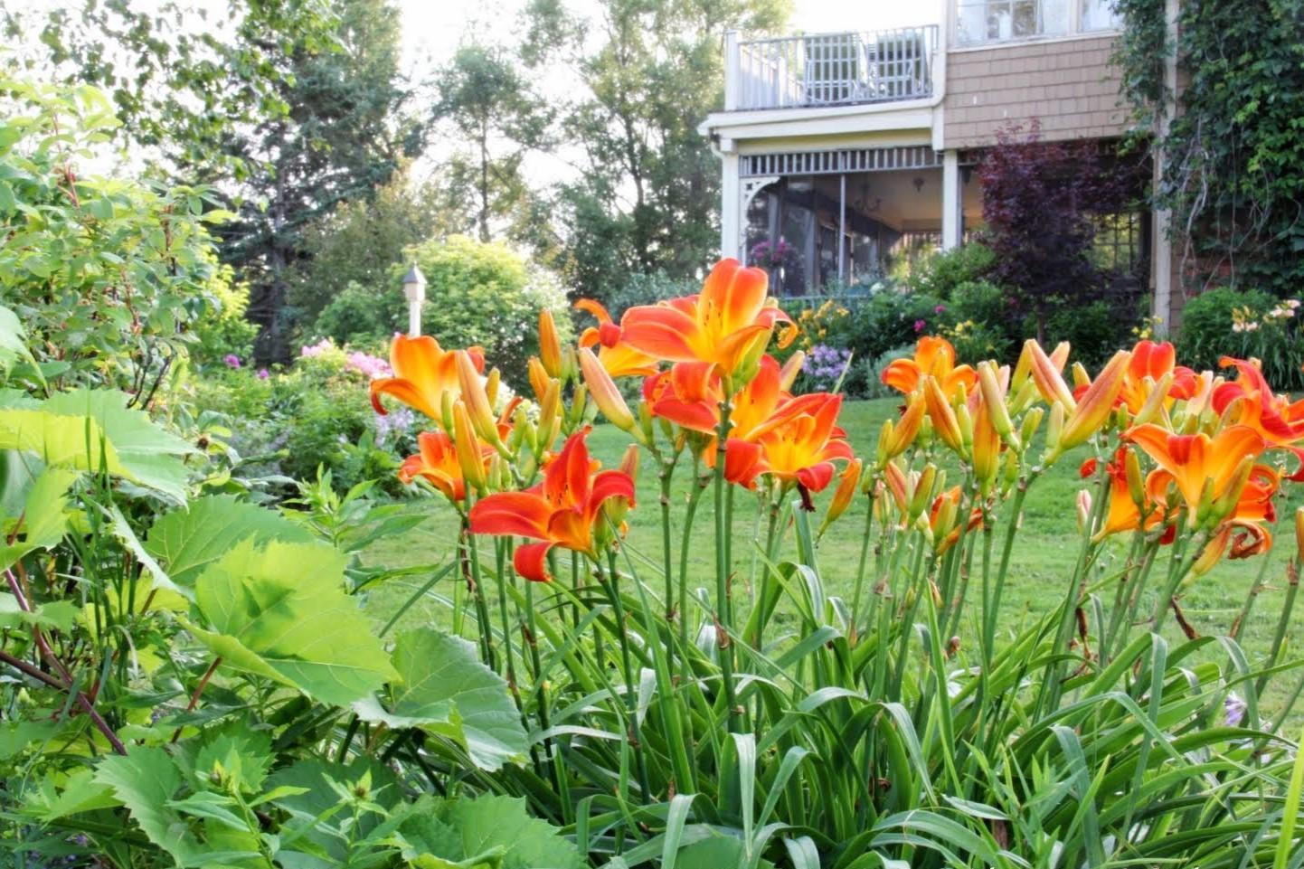 Záhrada,ktorá ťa nikdy neomrzí...divoká a krásna - Obrázok č. 50