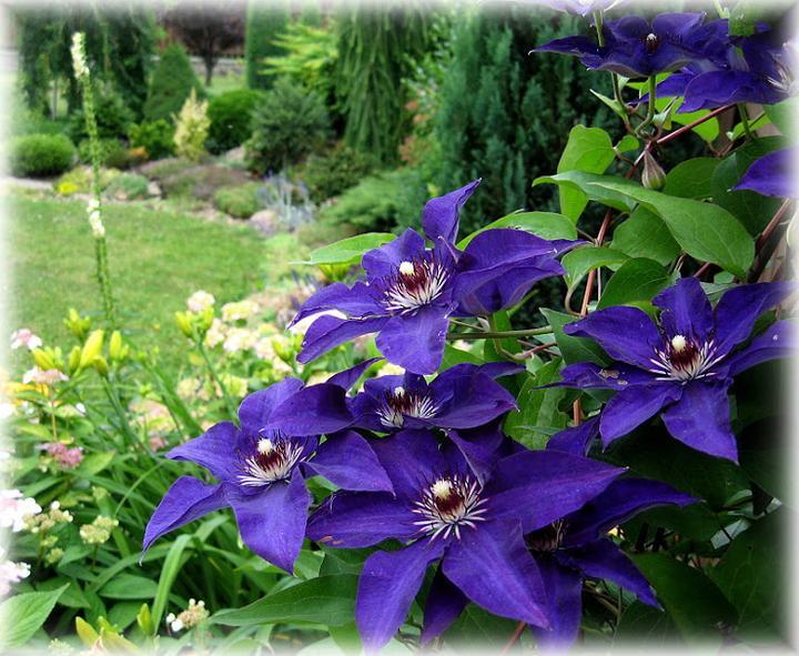 Záhrada,ktorá ťa nikdy neomrzí...divoká a krásna - Obrázok č. 56