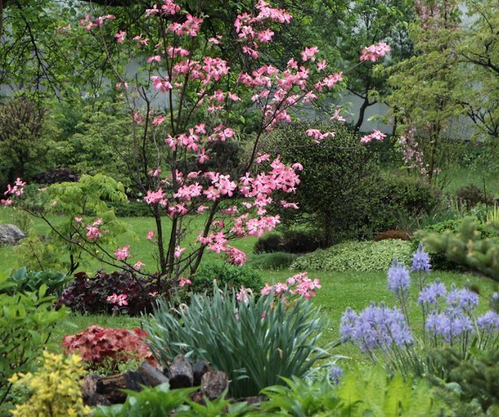 Záhrada,ktorá ťa nikdy neomrzí...divoká a krásna - Obrázok č. 58
