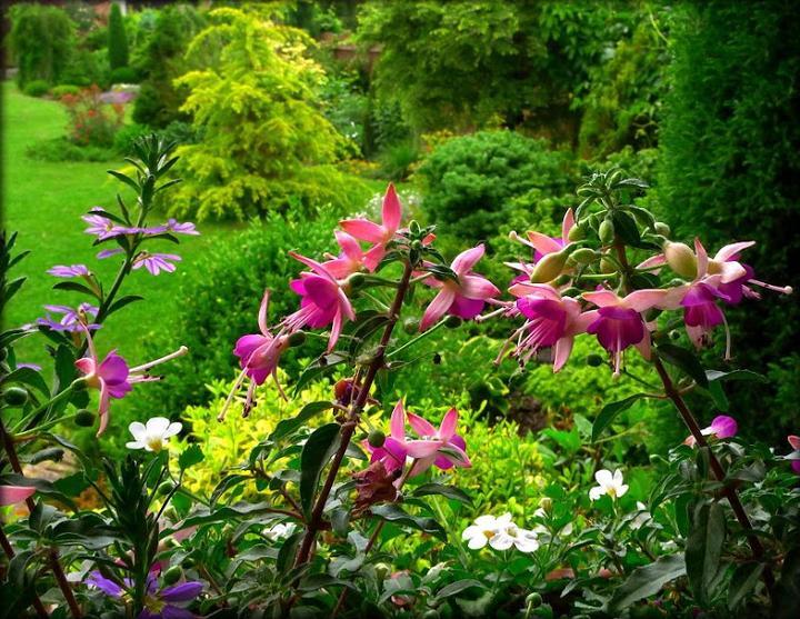 Záhrada,ktorá ťa nikdy neomrzí...divoká a krásna - Obrázok č. 60
