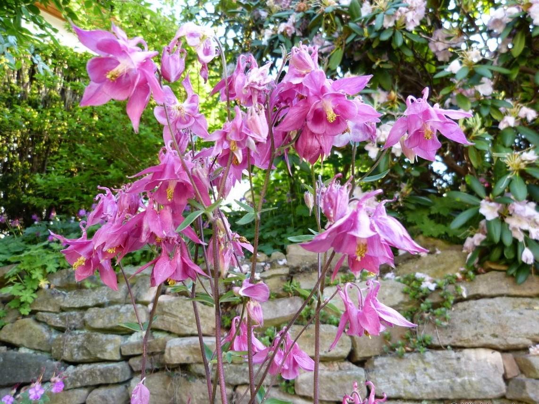 Záhrada,ktorá ťa nikdy neomrzí...divoká a krásna - Obrázok č. 61