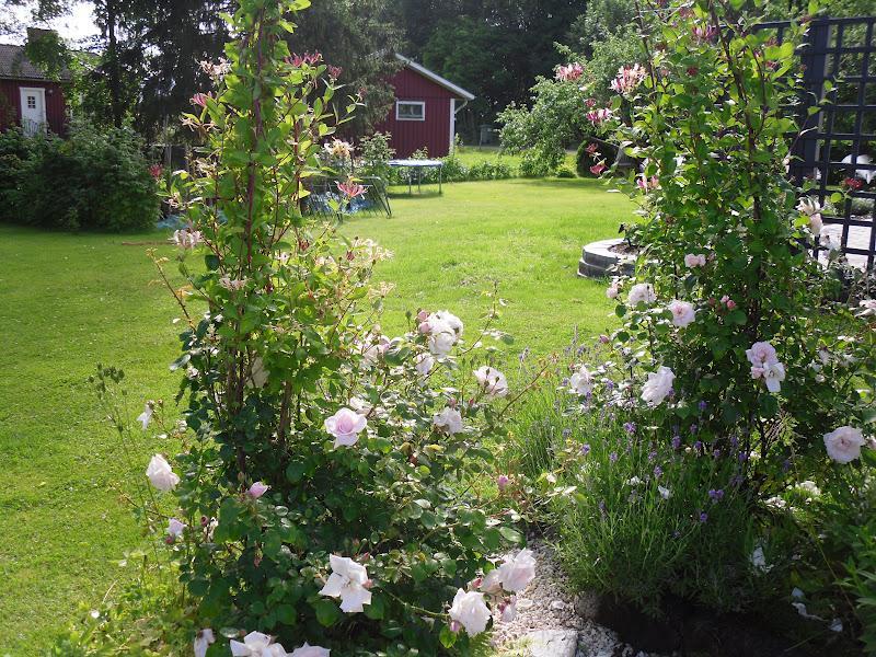 Záhrada,ktorá ťa nikdy neomrzí...divoká a krásna - Obrázok č. 63