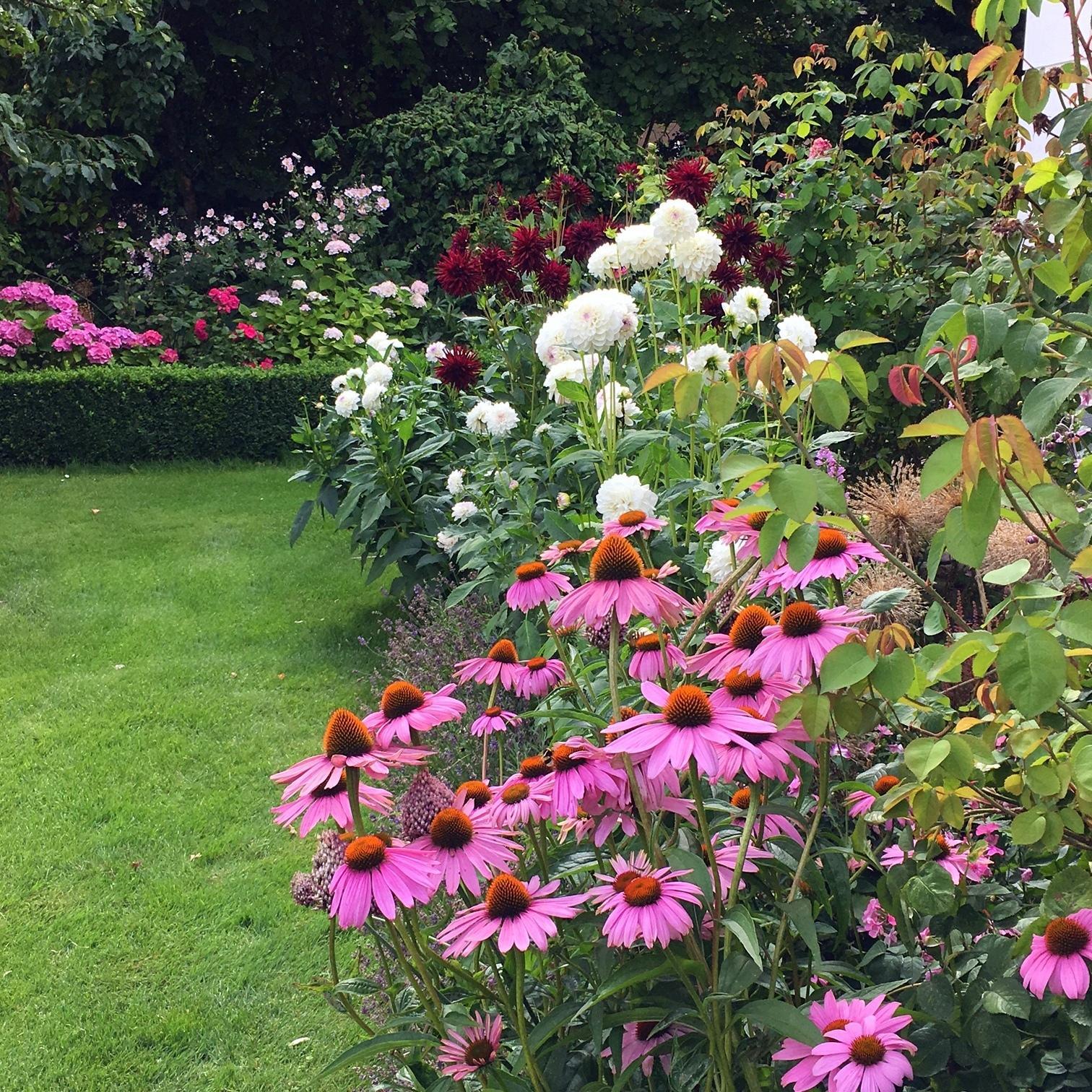 Záhrada,ktorá ťa nikdy neomrzí...divoká a krásna - Obrázok č. 70