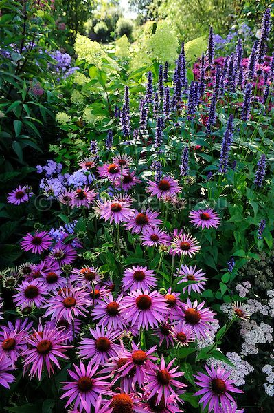 Záhrada,ktorá ťa nikdy neomrzí...divoká a krásna - Obrázok č. 81