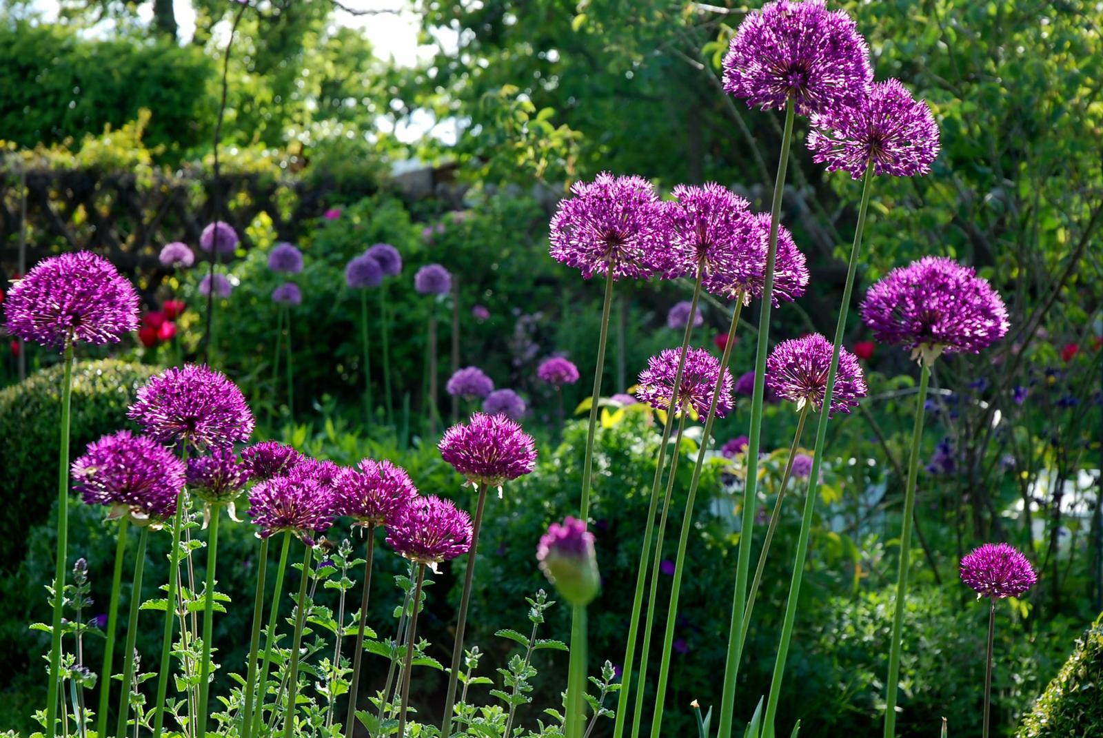 Záhrada,ktorá ťa nikdy neomrzí...divoká a krásna - Obrázok č. 82