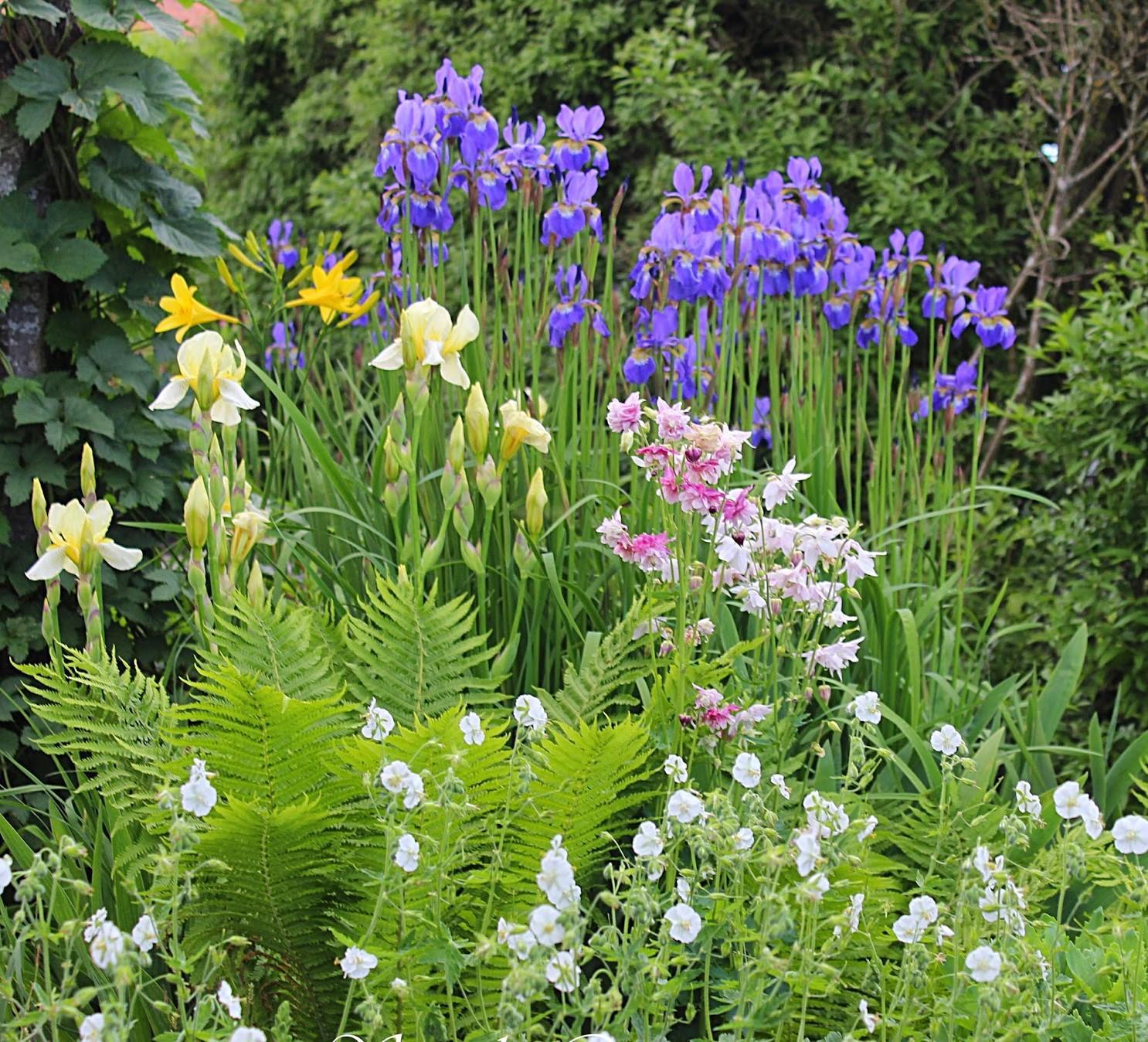Záhrada,ktorá ťa nikdy neomrzí...divoká a krásna - Obrázok č. 85