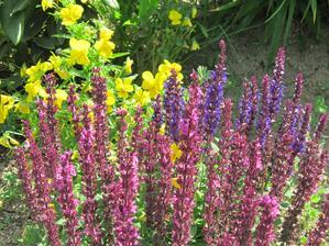 Veselá letná kombinácia...ružová a modrá šalvia so slniečkovými sirôtkami