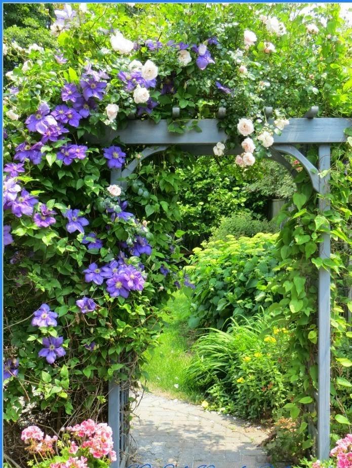 Záhrada,ktorá ťa nikdy neomrzí...divoká a krásna - Obrázok č. 91