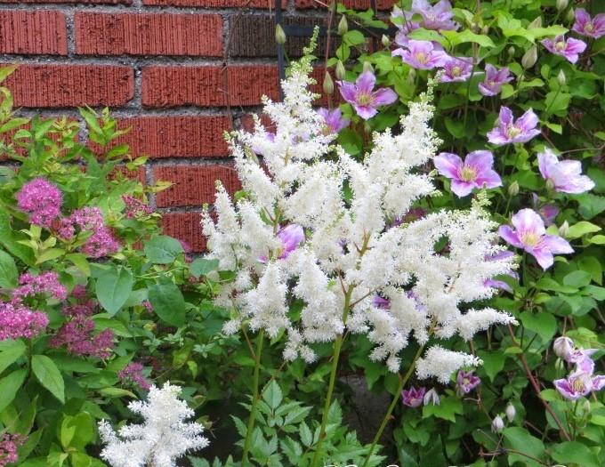 Záhrada,ktorá ťa nikdy neomrzí...divoká a krásna - Obrázok č. 92