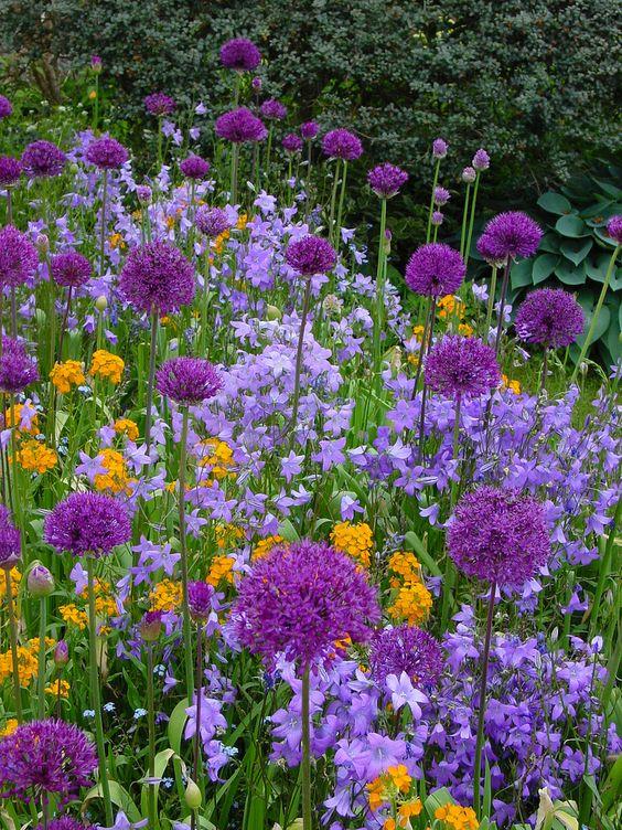 Záhrada,ktorá ťa nikdy neomrzí...divoká a krásna - Obrázok č. 95