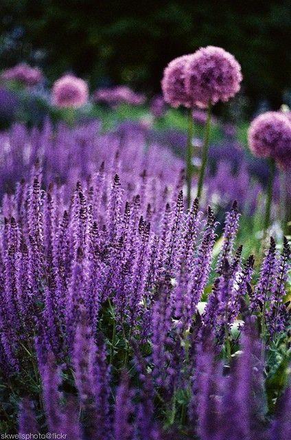 Záhrada,ktorá ťa nikdy neomrzí...divoká a krásna - Obrázok č. 97