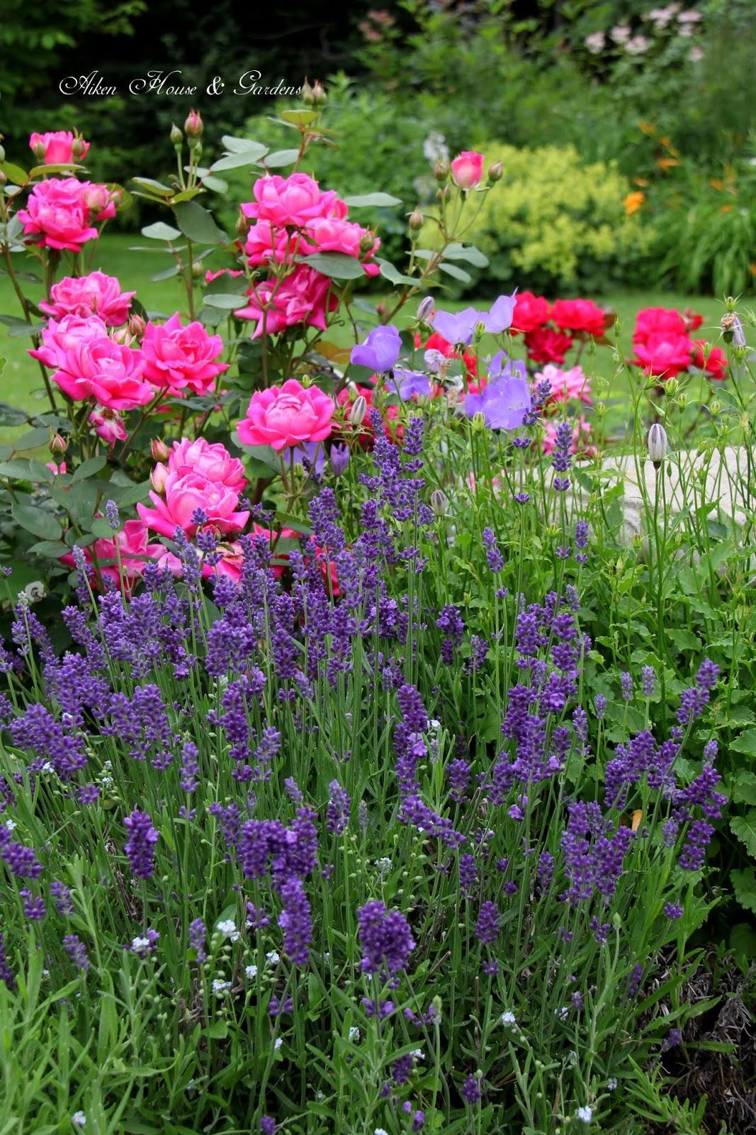 Záhrada,ktorá ťa nikdy neomrzí...divoká a krásna - Obrázok č. 99