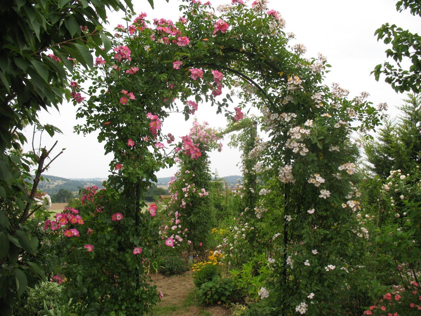Záhrada,ktorá ťa nikdy neomrzí...divoká a krásna - Obrázok č. 136