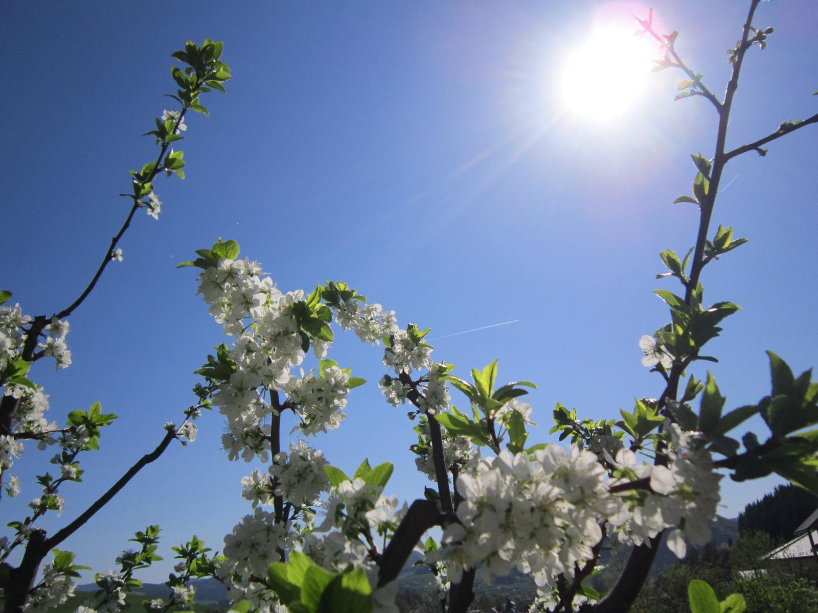 Pozvanie do našej jarnej záhrady - Obrázok č. 1