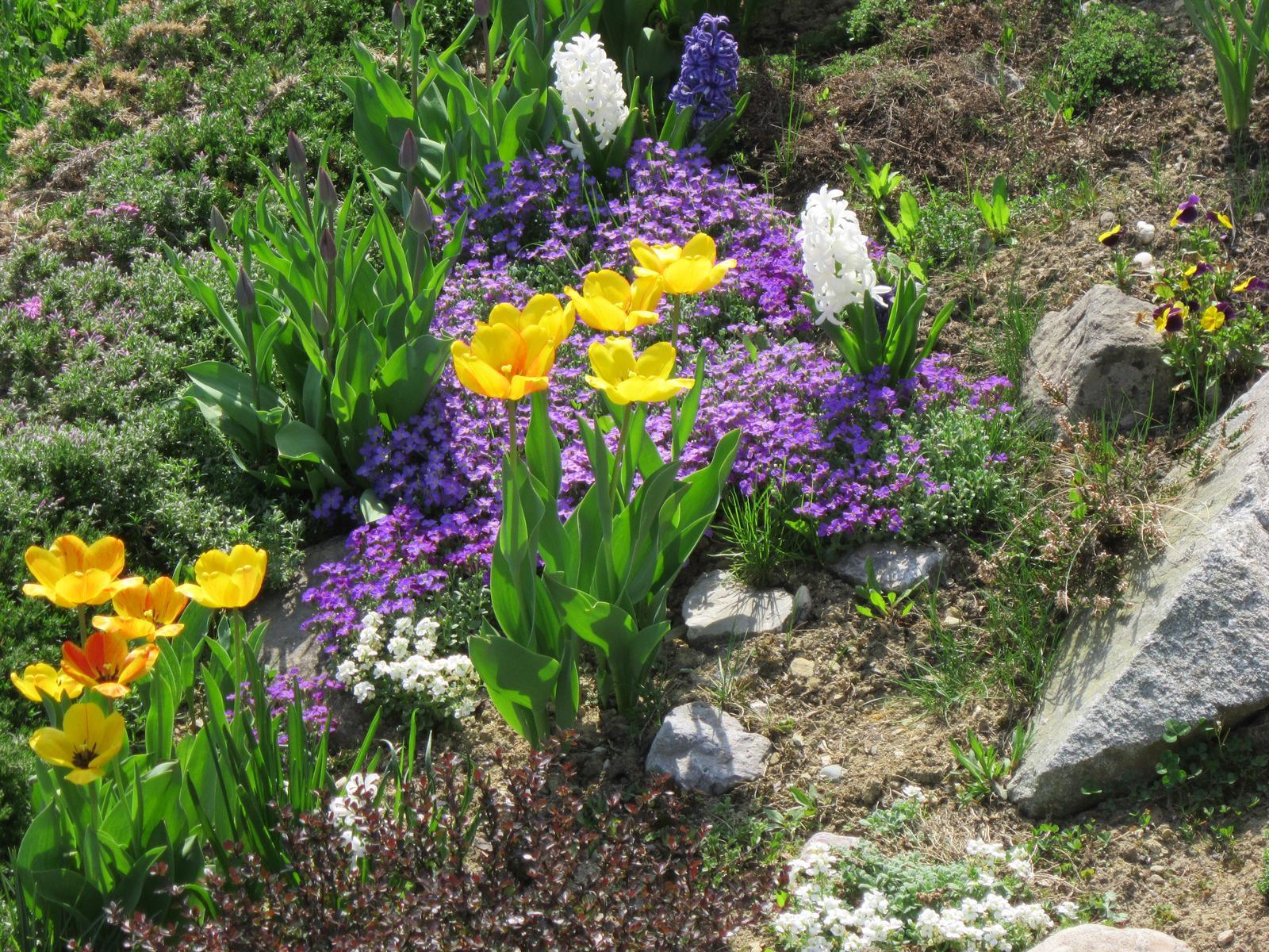 Pozvanie do našej jarnej záhrady - Túto kombináciu farieb mám najradšej...